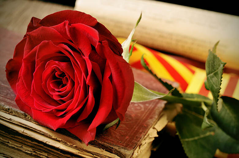 sant jordi tradition catalane rose livre