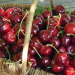 Cirera, fruita gurmet, joia catalana