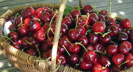 panier fruit cerise