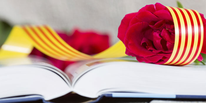 sant jordi livre rose fête