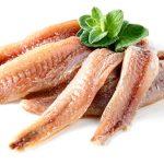 Las Anchoas, Especialidad de la pesca Catalana
