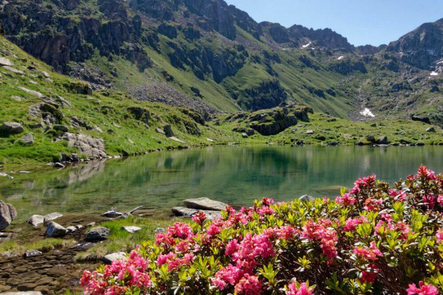 lac fleurs parc naturel aigüestortes