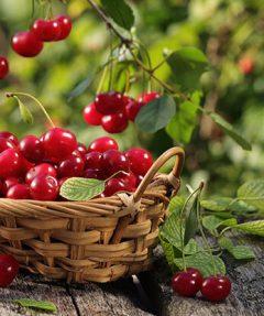 Fruit spécialité Céret Roussillon
