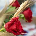 Sant Jordi ou une rose contre un livre