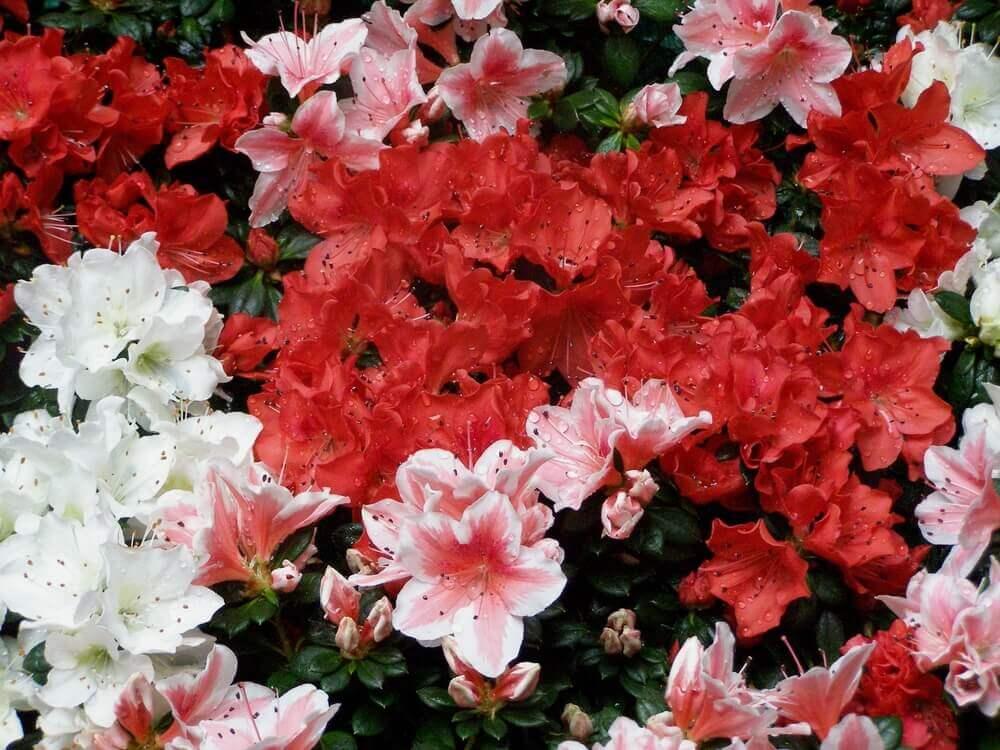 fleurs gérone
