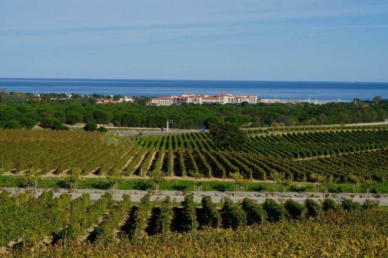 vignoble occitanie pyrenées orientales vignoble mer
