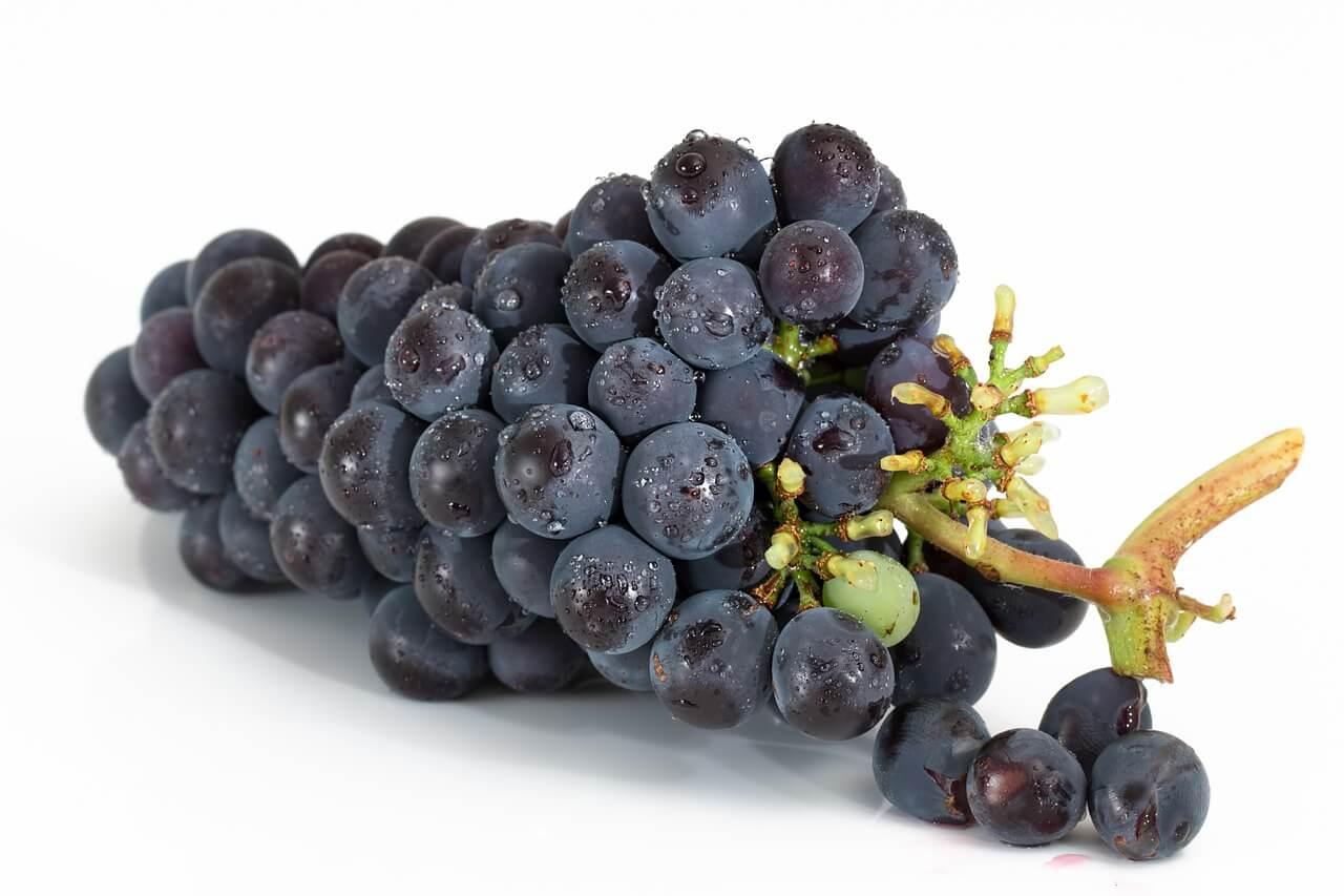 vin pyrénées orientales