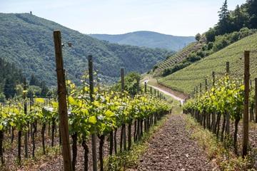 Pyrénées Orientales oenologie vignoble