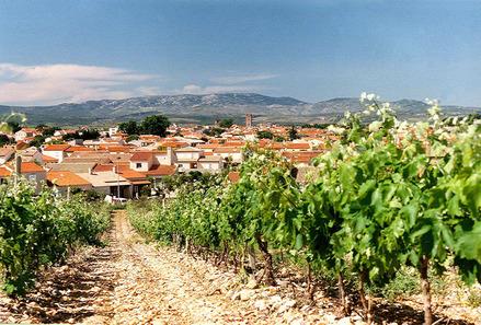 champs de vignes Pays Catalan qualité AOC
