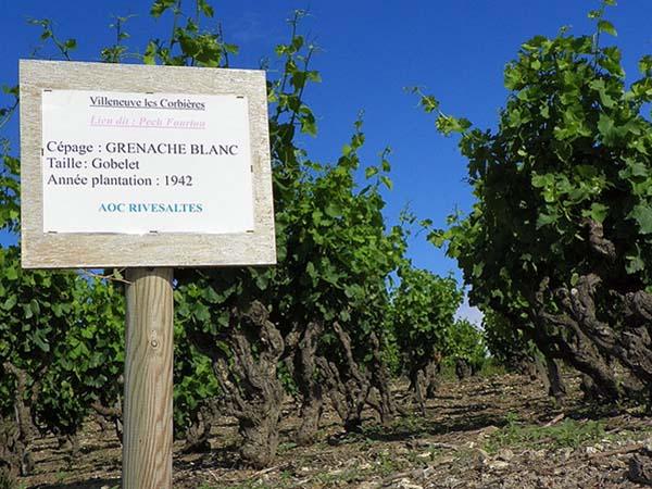 Vin dégustation Rivesaltes Qualité AOC eonologie