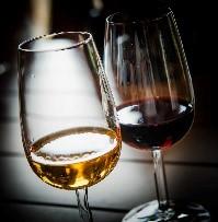 Œnologie dégustation vin Pyrénées Catalanes