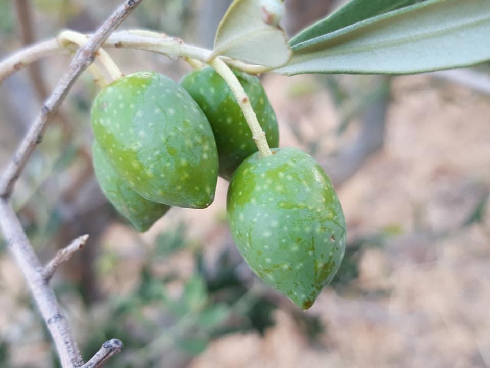 banyuls gastronomie produit du terroir spécialité catalane