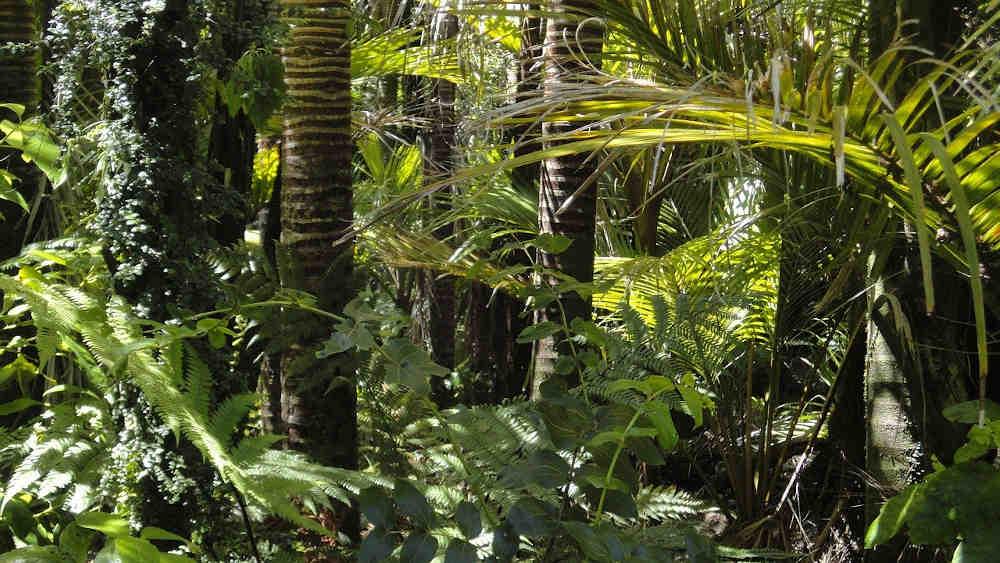 nature foret amazonienne slow environnement