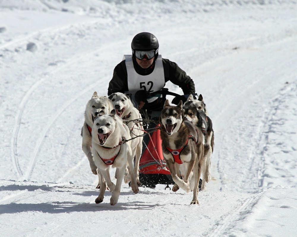course chien de traîneaux quoi faire pyrénées orientales février