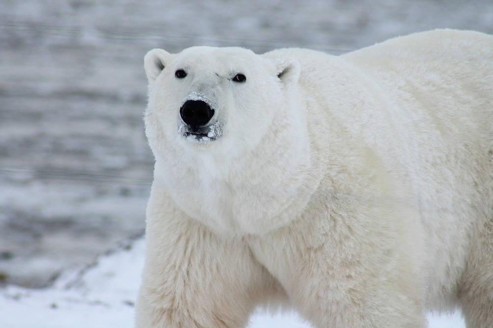 voyage neige nature animaux