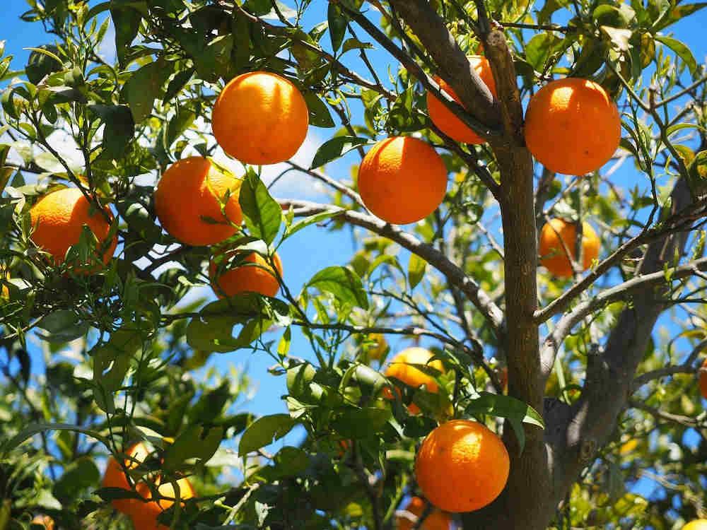 pays catalan fête orange Banyuls-sur-Mer 66