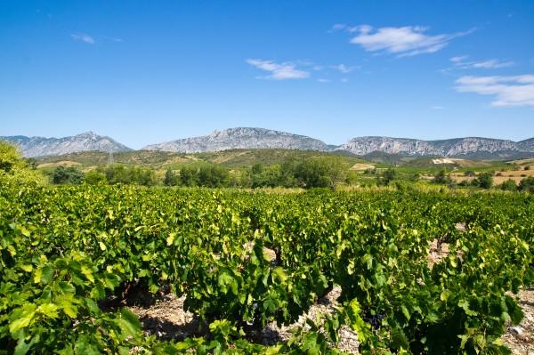 vignes village oenologie pyrénées orientales pays catalan occitanie