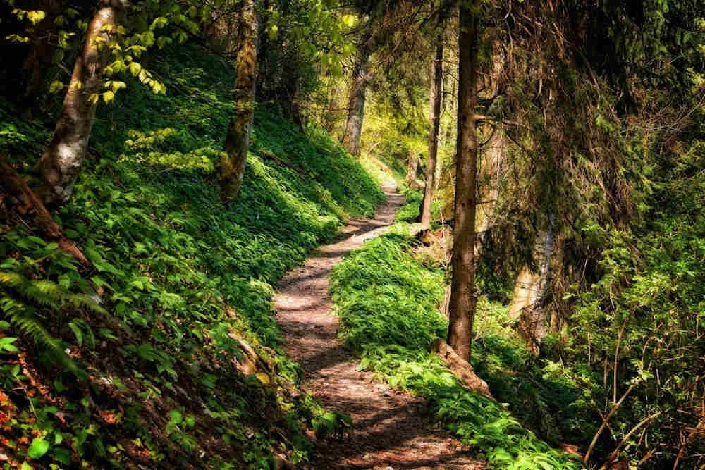 forêt nature pays catalan pyrénées orientales