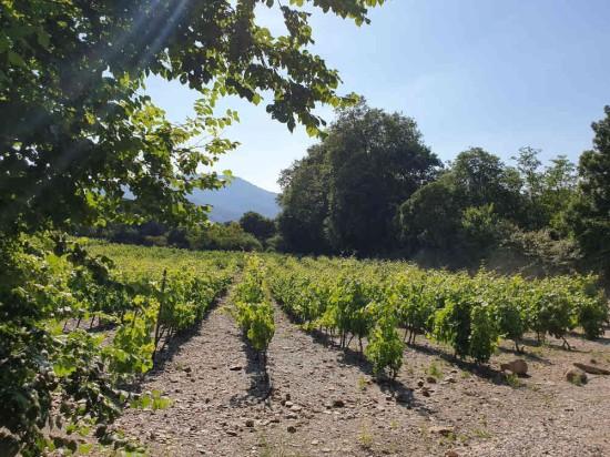 vignes pays catalan randonnée nature