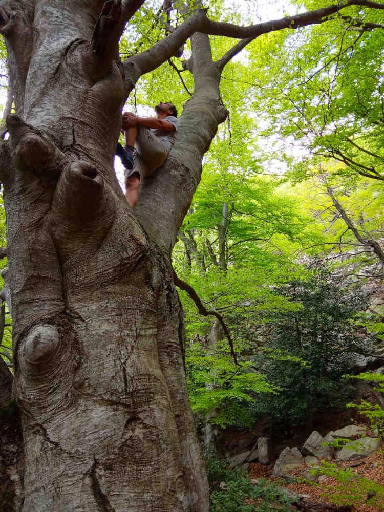 randotrement rando bain de forêt communication nature occitanie