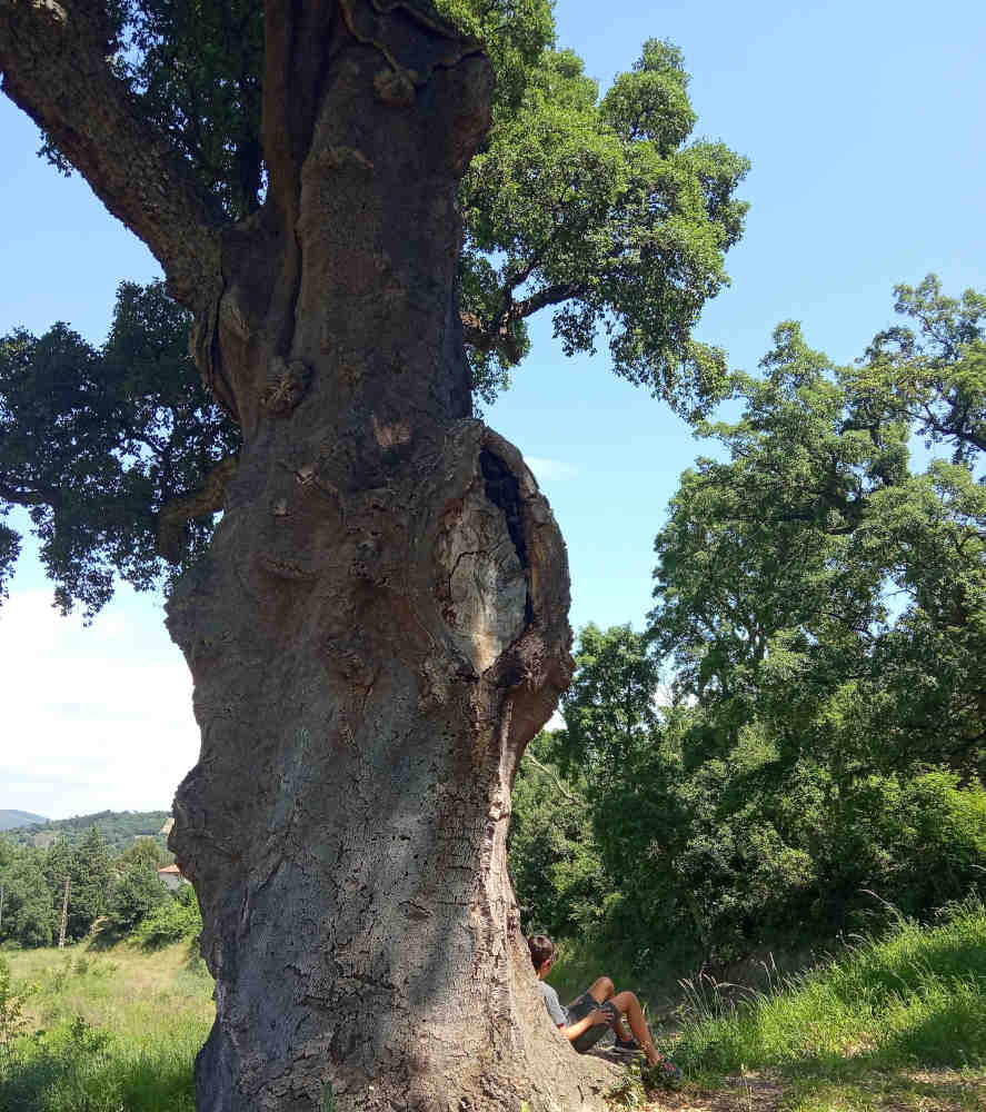 bain de forêt parle arbre nature slow pyrénées orientales