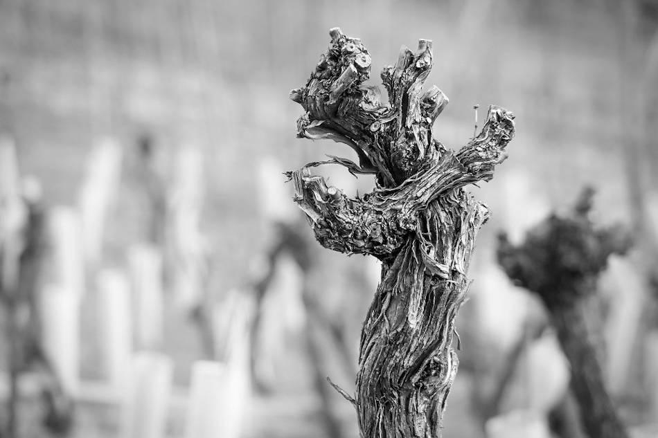 balade vignerone février pyrénées orientales