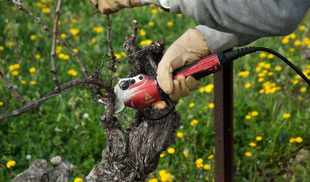 occitanie vignoble balade oenotouristique