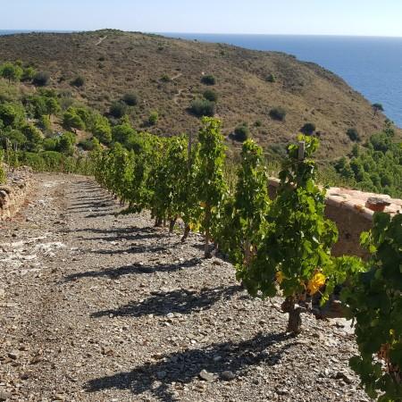 balade vignes pyrénées orientales