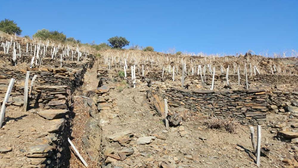 découvrir vignes écotourisme pyrénées orientales
