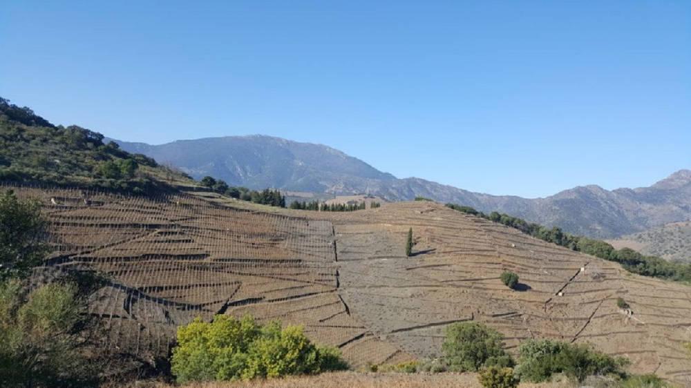 balade vignes oenologie vin cote vermeille