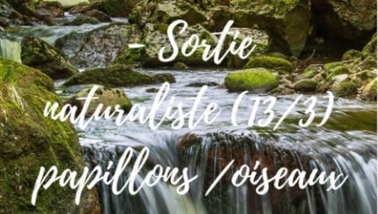 activité nature forêt Pyrénées Orientales randotrement