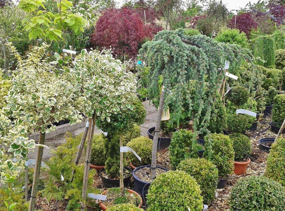 plantes marché de producteur printemps