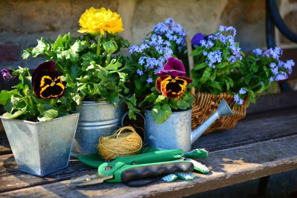 printemps pyrénées orientales fleurir