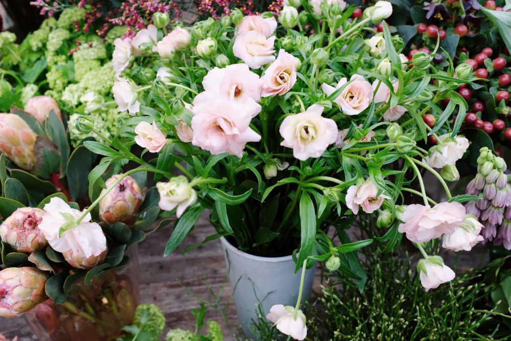 planter plantes roses