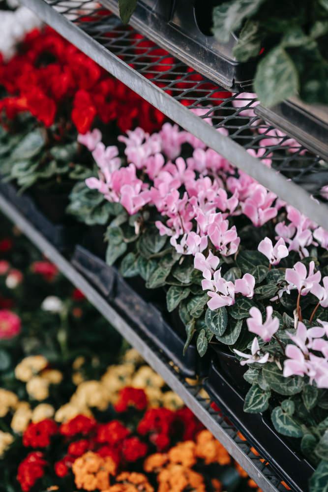 pépinière printemps jardiner planter