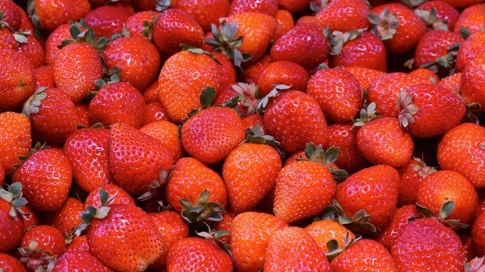 marché aux fraises pyrénées orientales