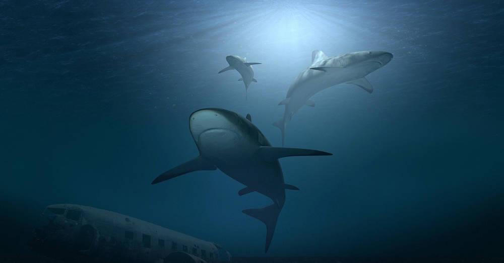 Requin Aquarium Canet-en-Roussillon Oniria