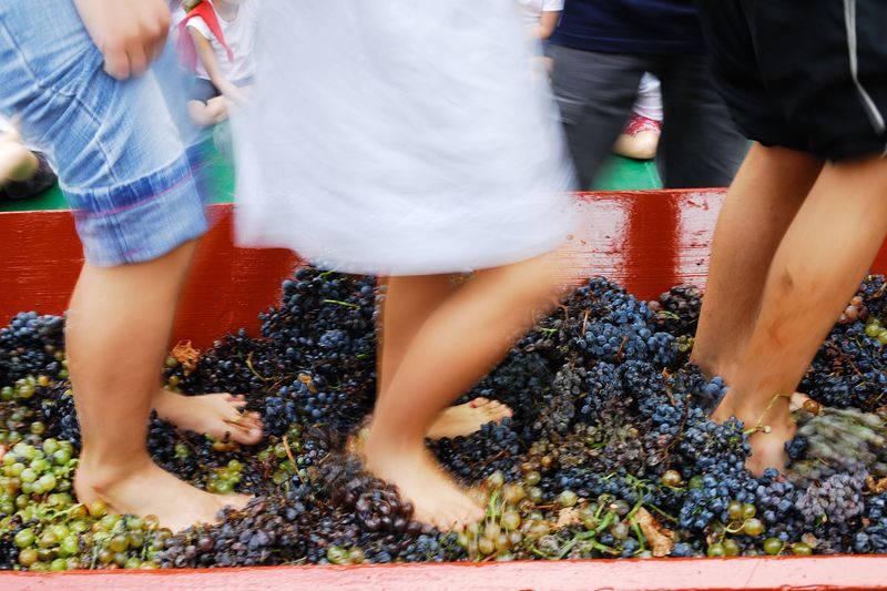 vin pays catalan occitanie
